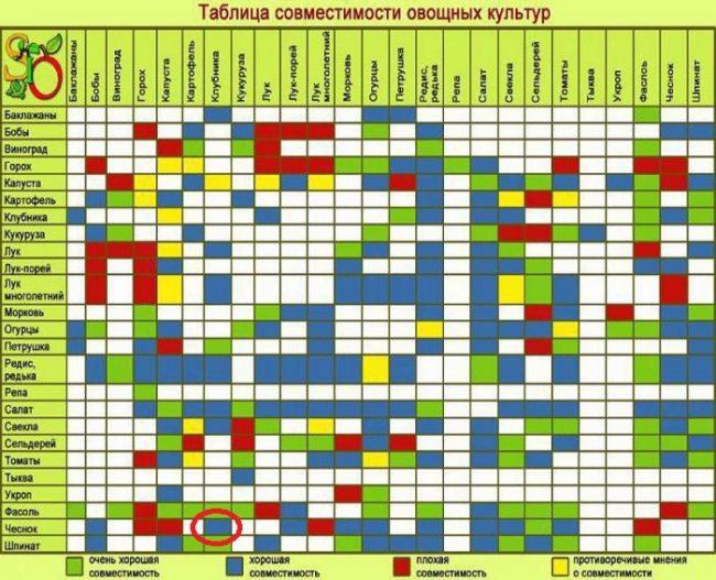Таблица совместимости овощных и ягодных культур