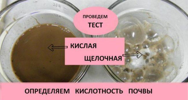 Тест кислотности почвы в домашних условиях с помощью уксусной кислоты