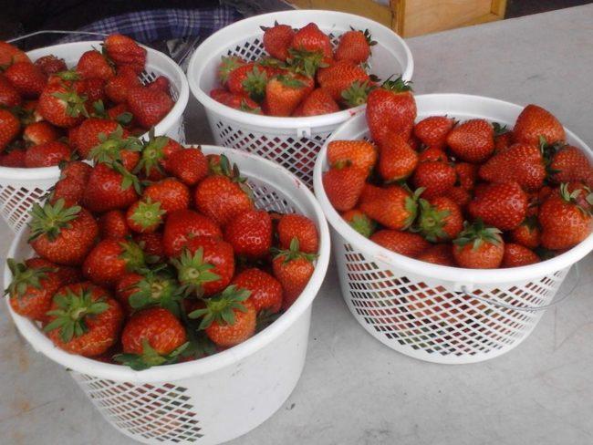 Корзинки с ягодами клубники нового урожая