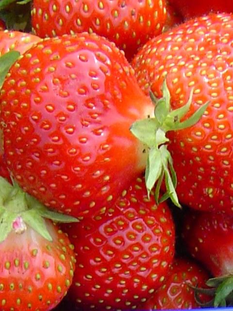 Крупные плоды клубники Вима Занта