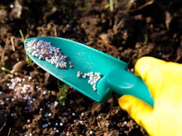 Гранулы минерального удобрения в садовом совке