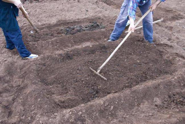 Грядка для посадки садовой клубники, выравнивание поверхности почвы граблями