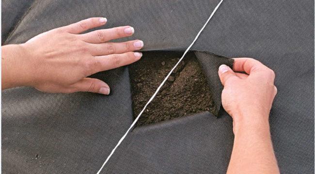 Отверстие в укрывном материале для посадки клубники