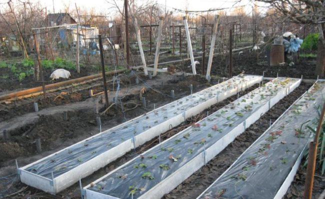 Высокие грядки для садовой клубники