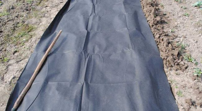 Спанбонд на земле, подготовка грядки для клубники