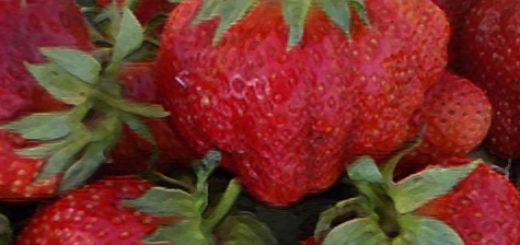 Спелые плоды клубника Зефир вблизи с ножкой