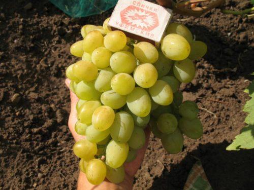 Спичечный коробок лежит на ветке винограда
