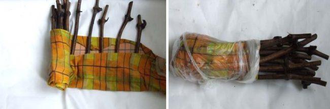 Завернутые в тряпку черенки винограда, проращивание в домашних условиях на подоконнике