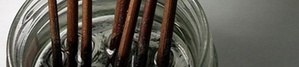Чубуки (саженцы) винограда в ёмкости с водой