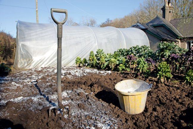 Подготовка места для посадки крыжовника, внесение доломитовой муки для нейтрализации почвы