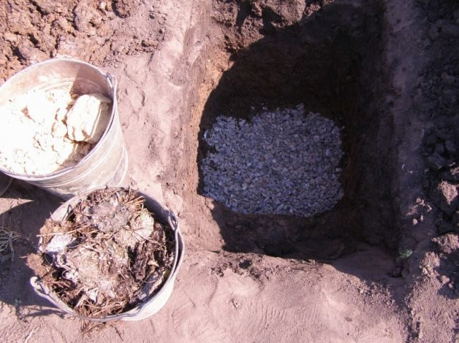 Посадочная яма для саженца винограда щебень для дренажа и ведра с компостом