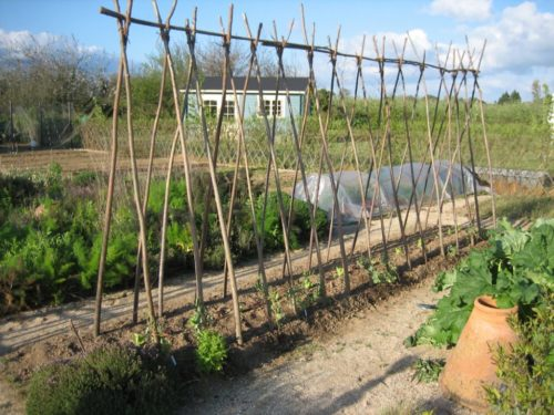 Простая виноградная шпалера из подручных материалов на садовом участке