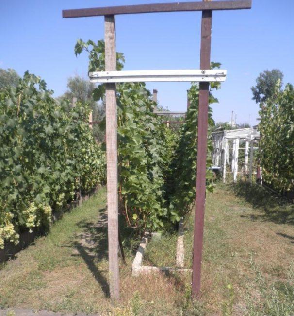 Двухрядная шпалера для выращивания виноградной лозы сильнорослого сорта