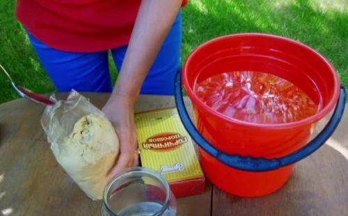 Разведение сухой горчицы для санитарного опрыскивания виноградной лозы