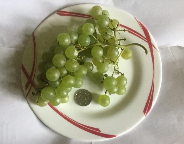 Кисть спелого винограда в керамической тарелке и монетка