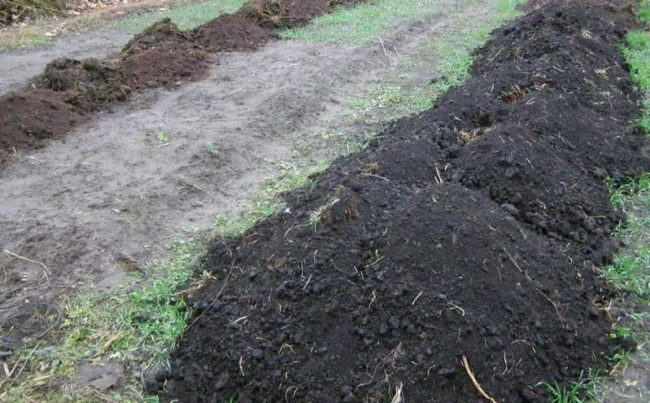 Кучи плодородного грунта для посадки саженцев
