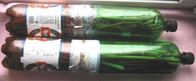 Самодельные контейнеры из пластиковых бутылок для хранения виноградных черенков