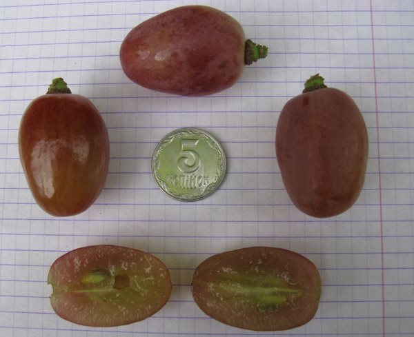 Целые плоды, разрезанная ягода винограда сорта Анюта с косточками и монетка