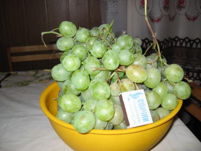 Кисти спелого гибридного винограда Кеша в пластиковой чашке и спичечный коробок
