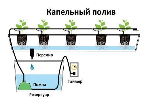 Схема и принцип работы системы капельного полива при выращивании клубники по методу гидропоники