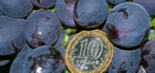 Спелая кисть винограда сорта Кардинал и 10 рублевая монетка