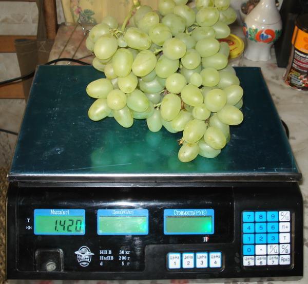 Крупная гроздь винограда сорта Аркадия на электронных весах