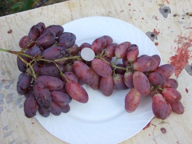 Гроздь спелого винограда и монетка на белой фарфоровой тарелке