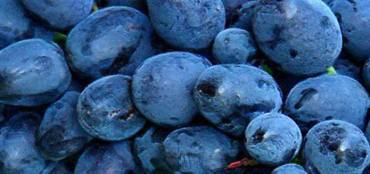 Спелые плоды винограда Кодрянка вблизи на кисти