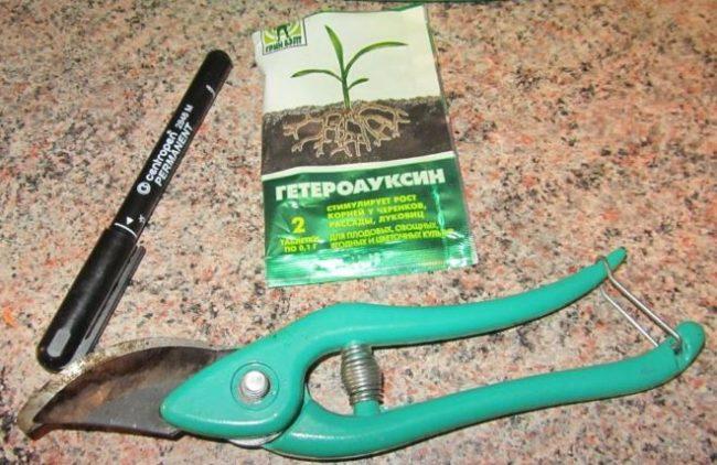 Пакет стимулятора образования корней Гетероауксин черный маркер и садовый секатор