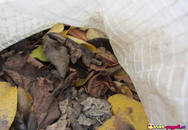 Сырая листва под укрываемым материалом винограда на садовом участке
