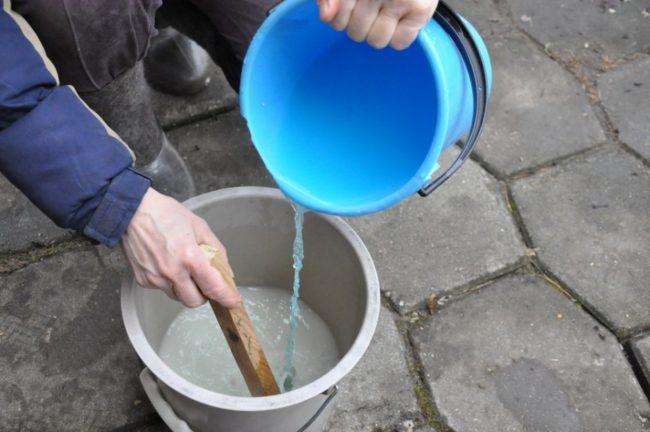 Приготовление раствора медного купороса для профилактического опрыскивания винограда