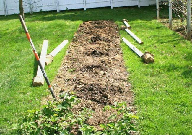 Место для крыжовника в саду, перекопка дернового слоя и удаление сорняков.
