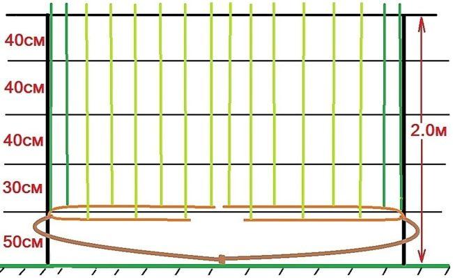 Схема одноплоскостной шпалеры для выращивания виноградной лозы