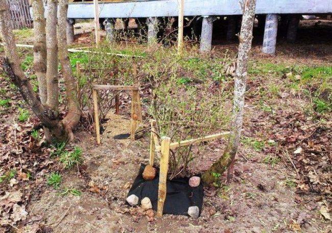 Простые самодельные ограждения из брусков и кольев для кустов крыжовника