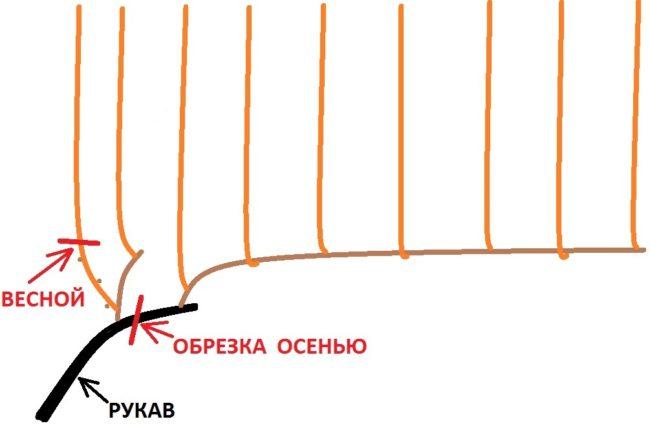 Схема обрезки плодового звена с сучком замещения виноградной лозы
