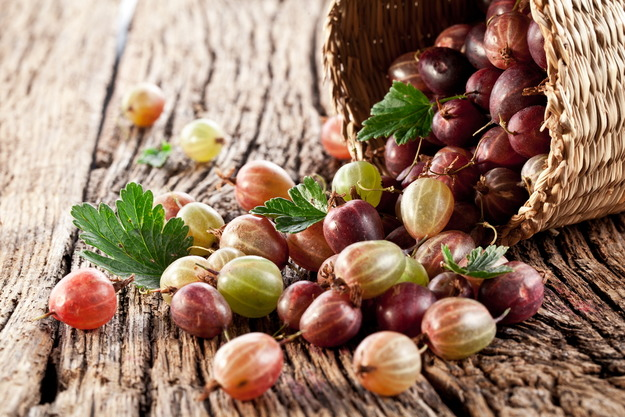 Разноцветные ягоды крыжовника высыпались из плетенного лукошка на деревянный стол в саду