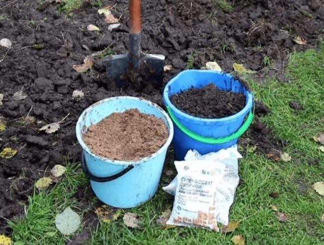 Ведро песка, ведро перегноя и пакет минерального удобрения – компоненты для подготовки питательной смеси