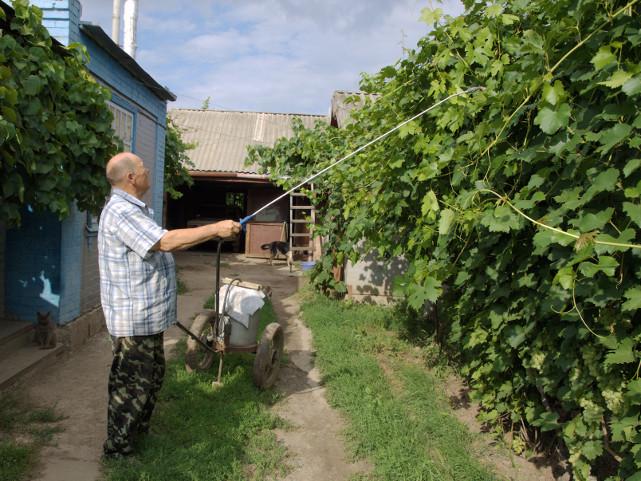 Подкормка винограда по листу в летний период с использованием садового опрыскивателя