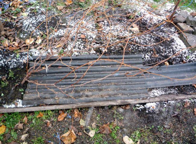 Подстилка для виноградной лозы из листового материала, подготовка зимнего укрытия своими руками