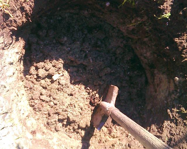 Яма для посадки саженца винограда Виктория с плодородным грунтом и штыковая лопата