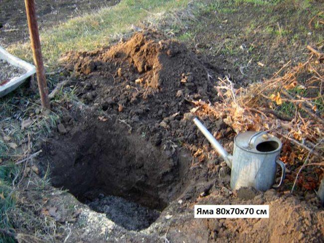 Посадочная яма для винограда рядом со стойкой шпалеры и лейка из оцинкованной жести