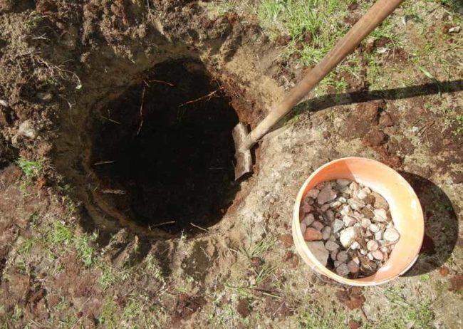 Посадочная лунка для крыжовника, устройство дренажа из мелкого камня