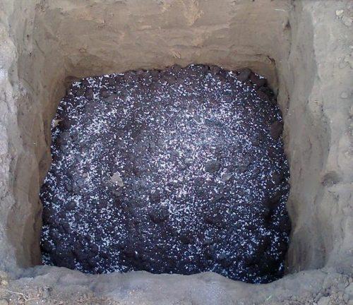 Плодородный грунт на дне ямы для весенней посадки саженца столового винограда.