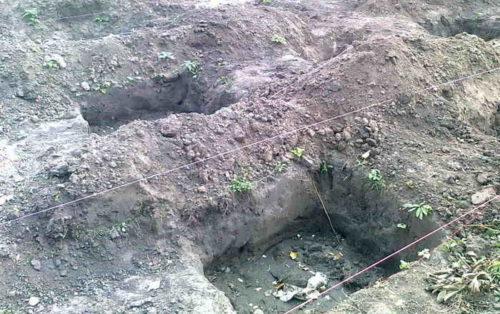 Ямы для осенней посадки саженцев винограда и натянутая бечевка