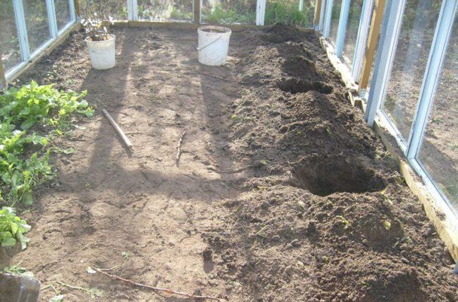 Посадочные ямы для выращивания винограда в закрытом грунте и теплица из алюминиевого профиля