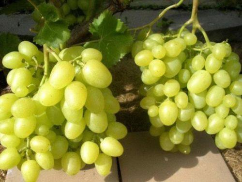 Грозди зелёного винограда с ягодами