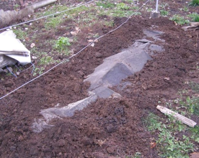 Присыпанный землей рубероид, укрытие виноградной лозы под гидроизолирующий материал