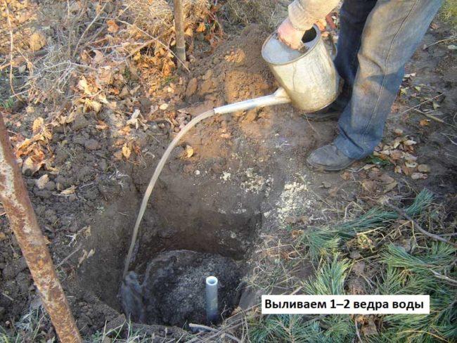 Заполнение посадочной ямы плодородной смесью и пролив водой из лейки