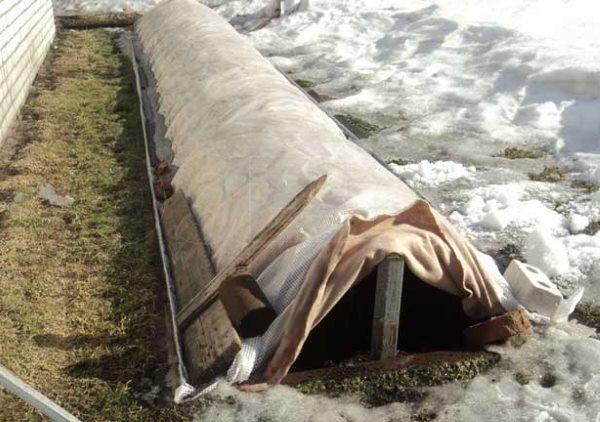 Зимнее укрытие винограда в период таяния снега, открытие торцевой стороны для проветривания