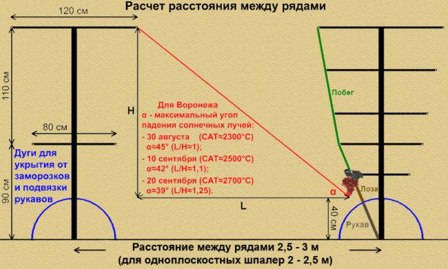 Схема расчёта расстояния между соседними рядами виноградных шпалер